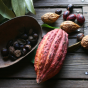 Cacao – The Food of the Gods