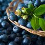 Blueberries Health Benefits & Nutrition