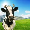 Hormones in Milk