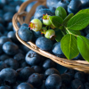 Blueberries Health Benefits & Nutrition